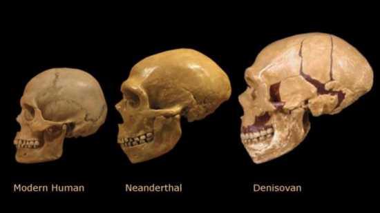 Especie Denisovanos no humanos