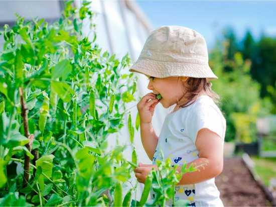 Intoxicación por plantas niños