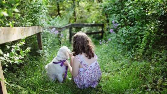 plantas peligrosas y tóxicas para niños y mascotas